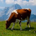 Сэндвич-панели в молочном производстве